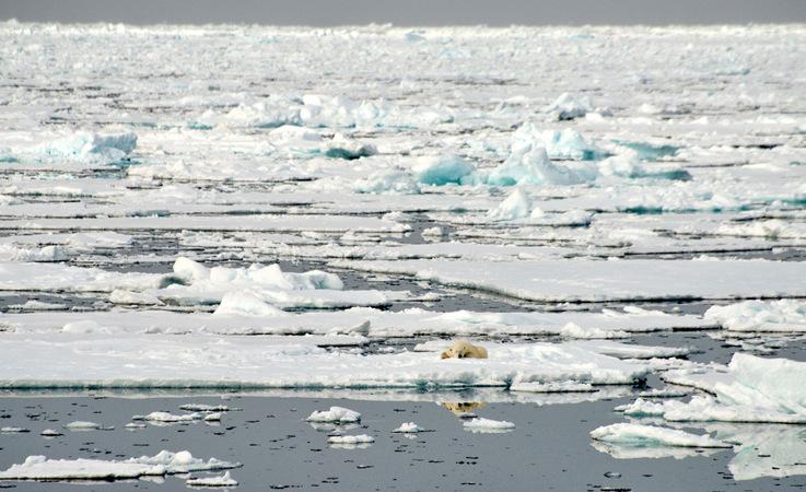 Grosse Teile des arktischen Ozeans werden jedes Jahr von neuem mit Meereis bedeckt. Während aber